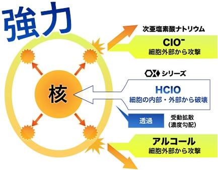 次亜塩素酸ナトリウム(CIO-)やアルコールは菌の細胞外部から攻撃するのに対して、OXシリーズ(HCIO)は細胞膜を透過(濃度勾配による受動拡散)し、細胞の外部・内部の両方から菌を破壊する